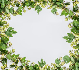 Twined hops vine frame on white background, top view