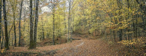 Лесная тропа. Осенний лес на Кавказе,Краснодарский край, Россия