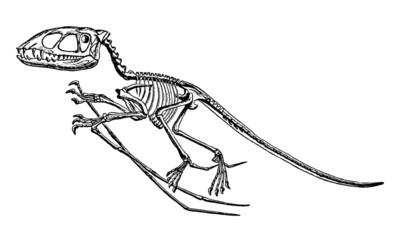 Vintage Dinosaur Skeleton Illustration