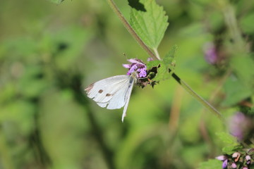 White butterfly on green background