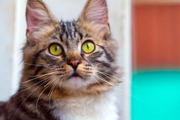 Portrait of a cute striped cat close-up.