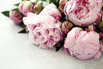 Peony. Close up from beutiful pink peony overhead gray concrete backgroun