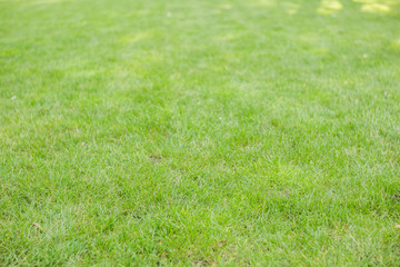 Green grass. natural background texture