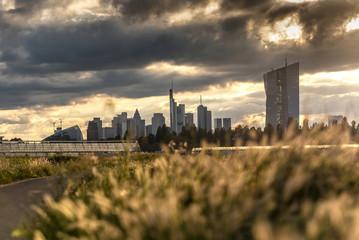 Gewächshäuser in Frankfurt Oberrad mit Skyline und EZB im Abendlicht