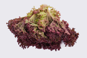 Red lettuce isolated on white. Purple lettuce salad isolated on white.