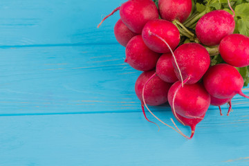 Red ripe radishes close up. Blue wooden background.