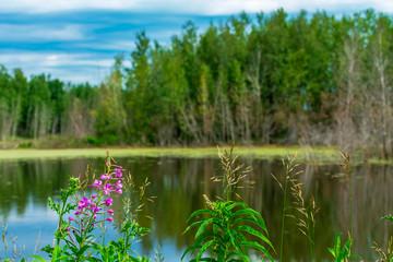 Elk Island Beaver Pond, Alberta Canada