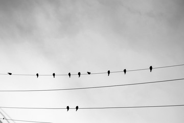 Bird on a wire. Birds hanging on a lighting cable.