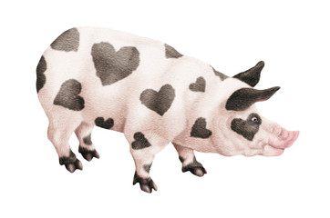 cochon noir et blanc, cochon coeur, chef, maître d'hôtel, restaurateur, illustration, photo, plat