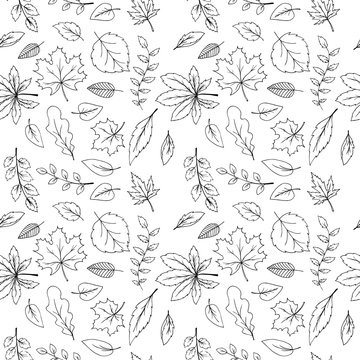 Autumn falling leaves pattern, hand drawn in sketched style, black and white vector illustrations.
