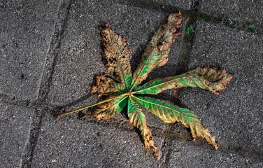 Kastanienblatt vertrocknet auf Straßenpflaster
