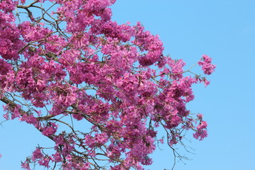 pink flowers and sky blue