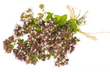Origanum vulgare (oregano) herb - spice on a white background