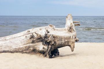 broken tree on the beach