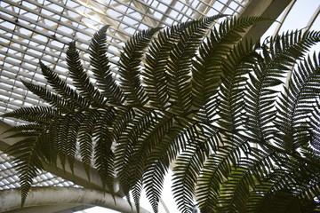 Door stickers Palm tree 1
