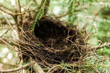 Empty bird nest in branches, wild forest animals.