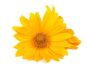 Calendula flowers isolated on white background. Marigold flower Medicinal herbs.