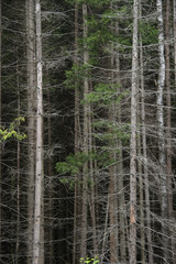 Dry coniferous forest