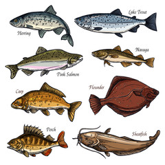 Sea and freshwater fish animals isolated sketches