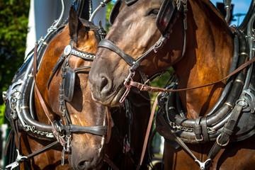 Horses 16