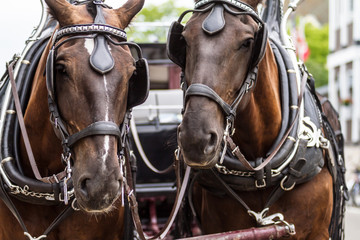 Horses 10