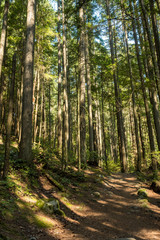 sun cast shadow on the path in the forest surrounded by tall tress