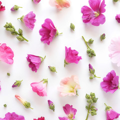 Fototapete - Composition pattern from plants, wild flowers and  berries, isolated on white background, flat lay, top view.