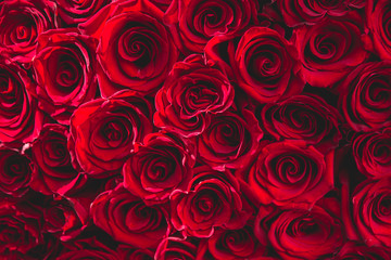 fresh dark red roses close up texture background for St. Valentine's Day