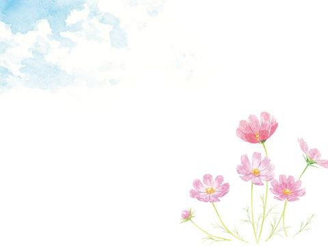 水彩 青空と秋桜