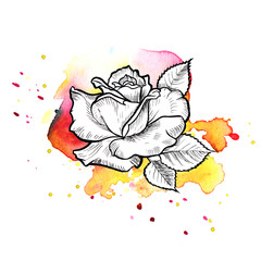 A bright red formless watercolor blot.  Rose ink flower line graphic