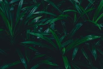 Dark botanical background tropical leaves, faded