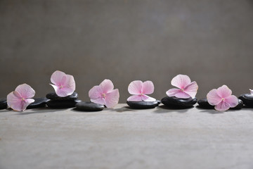 Row of Pink hydrangea petals with black stones on gray background