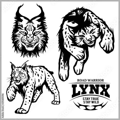 Lynx Wildcat Logo Mascot Illustration Stockfotos Und Lizenzfreie