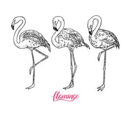 set of cute flamingos