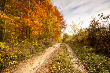 Road in a colorful, autumn park.Pomerania ,Poland