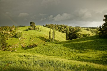 Foto op Plexiglas Pistache The New Zealand landscape with the rainbow near Marokopa Falls, North Island of New Zealand