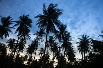 coconut tree silhouette seaside thailand view sunset