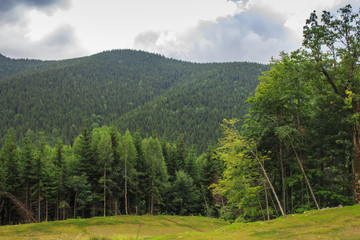 Green trees on the background of the Carpathian Mountains