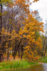 Photo of orange autumn forest with leaves near the lake