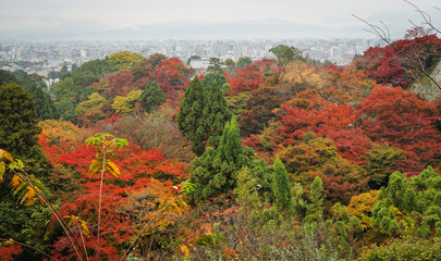 Autumn trees at garden in Kyoto, Japan