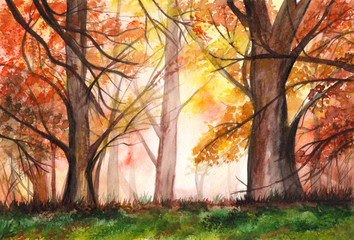 Watercolor landscape of autumn red forest. Sunlight and autumn forest. Illustration.