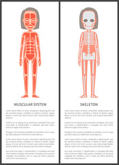 Muscular System and Female Skeleton Colorful Card