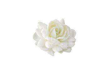 White jasmine on white isolated background