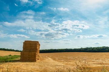Paysage sur un champ de blé  avec des ballots de paille empilés sur un ciel bleu en été