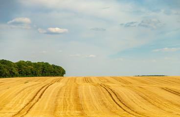 Sillons d'un champ de blé laissés par les traces d'un tracteur, formant des vagues