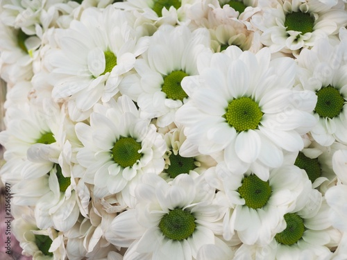 Chrysanthemum white mums flowers stock photo and royalty free chrysanthemum white mums flowers mightylinksfo