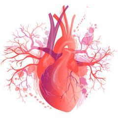 Vector realistic Human heart