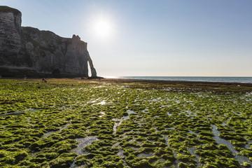Green Kelp covered Beach in front of Porte d'Aval, Cote d'Albatre, Pays de Caux, Seine-Maritime, Haute-Normandie, France