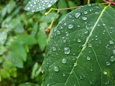 Dewdrops