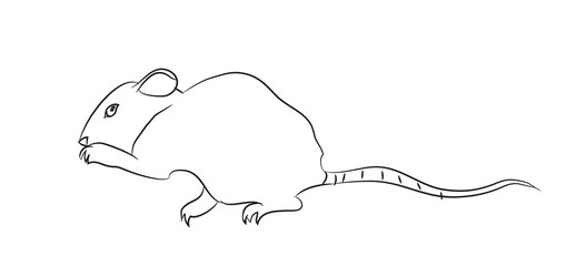 mouse lines, vector